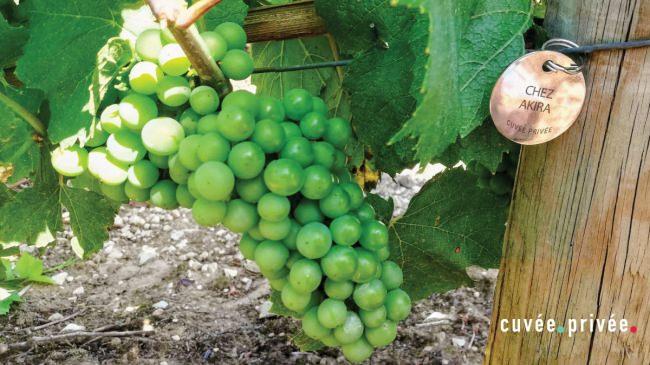 葡萄の木をアドプトし仏ワインの舞台裏を発見する、新オンラインサービスが本日より1ヶ月限定オープン