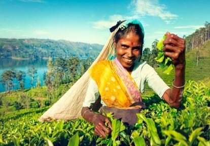 スリランカ最古の紅茶ブランドが 「くまのプーさん」デザイン紅茶セットを19年夏より発売