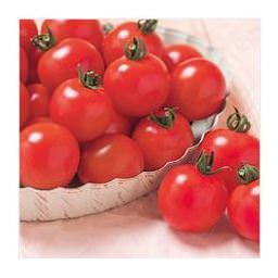 大人の8割、子どもの7割が「トマト好き」! ~健康・美容づくりに「トマト」の意識高まる~