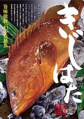 【10月限定】幻の高級魚を味わえる!! きじはたフェア開催中~長門市、萩市及び阿武町と連携~