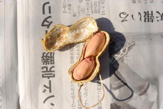 殻付き唐人豆