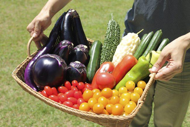 サントリーフラワーズ(株)「本気で野菜!」プロモーション