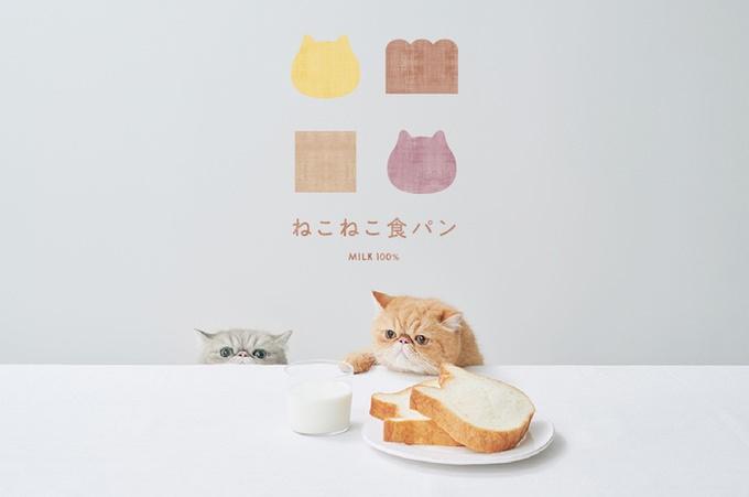 ねこ型の高級食パン専門店『ねこねこ食パン』が東京・表参道にオープン