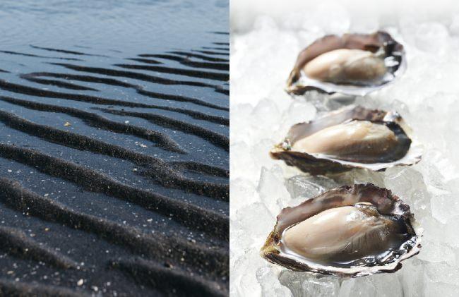 【 新発売 】 日本初!干潟で育つブランド牡蠣「ひがた美人」の、おうちで簡単に生で食べられる冷凍牡蠣の販売をスタート!