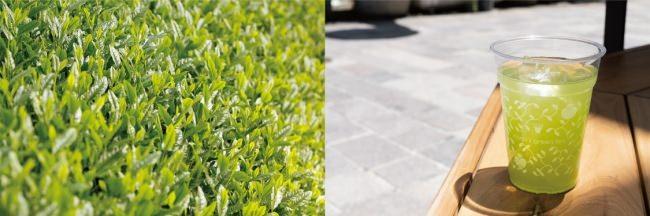 ナナズグリーンティー、生産者コラボ第一弾!京都の「新茶」、「玉露わらび餅パフェ」、「玉露ゼリーフローズン」登場