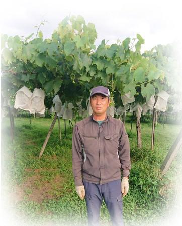 長野県北信地区でナガノパープルを栽培する農家さん