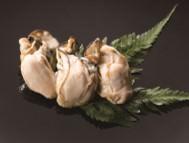 <牡蠣スモーク> 濃厚な甘みが特長。洋風にお楽しみいただけるようスモークで