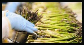 asparagus-copy