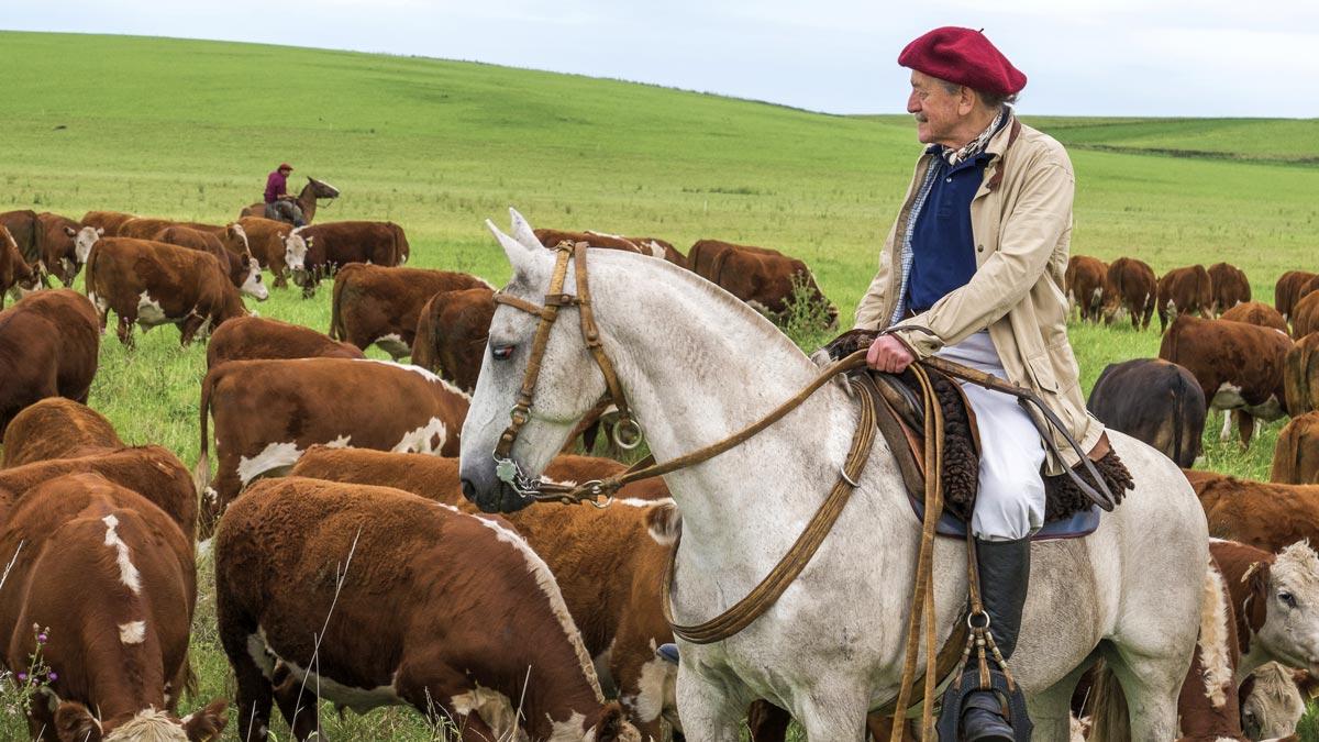 Dieter Meier mit Rindern