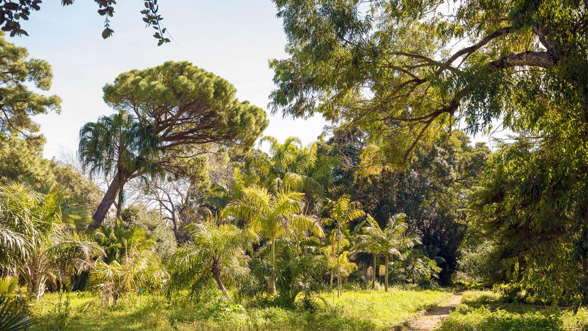 Der botanische Garten, ein Urwald mitten in der Stadt.