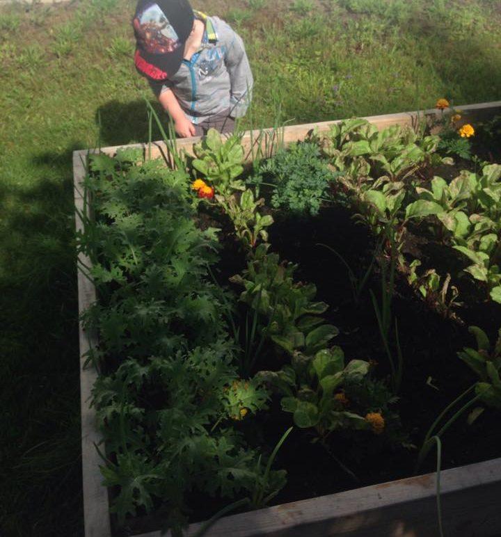 jardin surélevé enfants carré potager