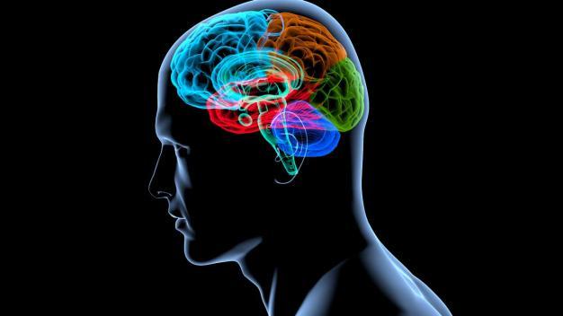 Wie die Hirnforschung das Marketing beeinflusst