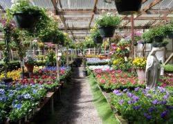 Three Steps for Finding the Right plants at a Nursery