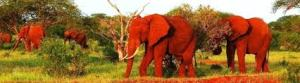 Red Elephants