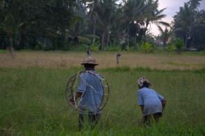Indonezja.NEF-008