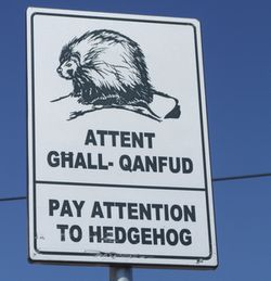 Image result for hedgehog signs malta