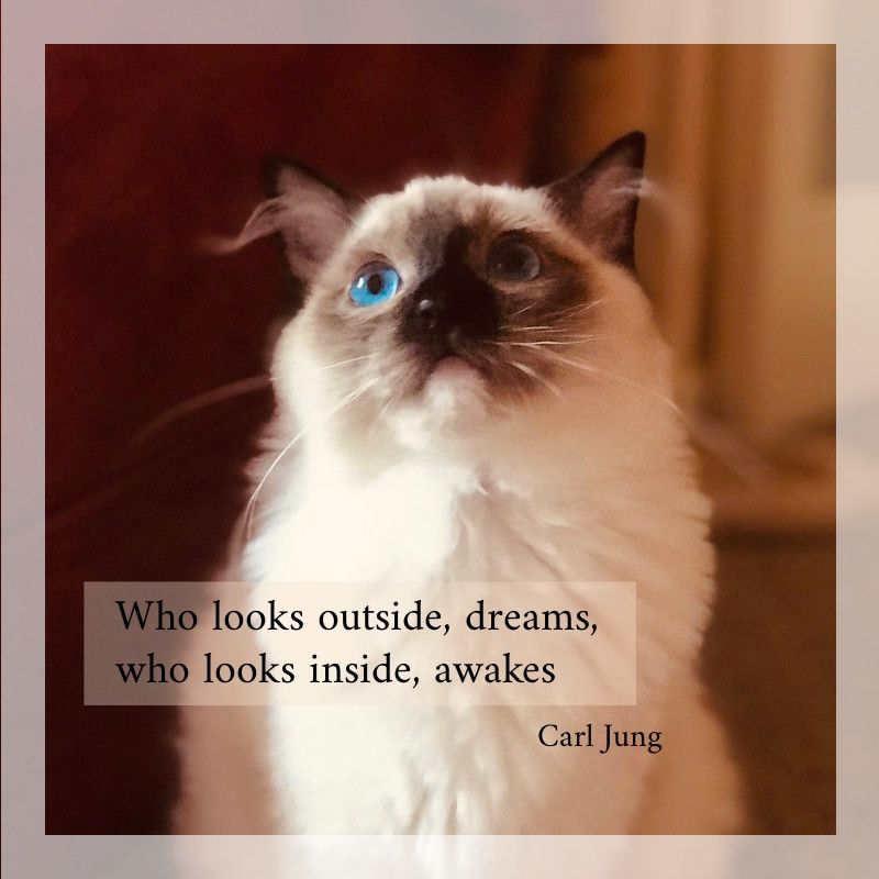 Therapy Quote Carl Jung dreams