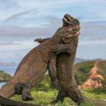 Eksotisme Pulau Komodo
