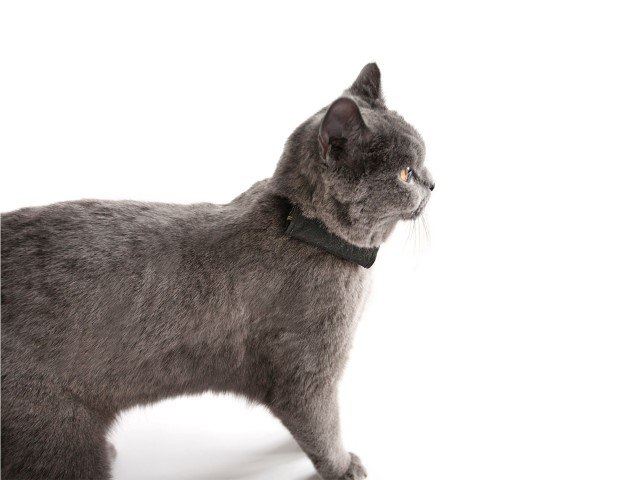 Charmant Katze 5 Draht Verwendet Bilder - Die Besten Elektrischen ...