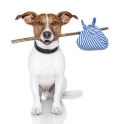 dog with a stick and a blue bad