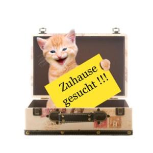 """Katze mit Plakat """"Zuhause gesucht"""" sitzend in einem Koffer"""