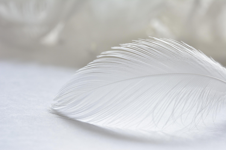 2020年1月4日 初売りスタート♪  『天使のふわシリーズ』&『セイクレットソックス』