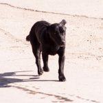 Завршена акција вакцинисања и кастрирања паса луталица у општини Грачаница