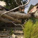 Јак ветар оборио столетно дрво у Ораховцу