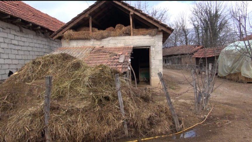 У Гораждевцу украдена крава породици Дашић