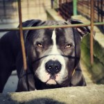 Грачаница: На мети лопова сада и расни пси