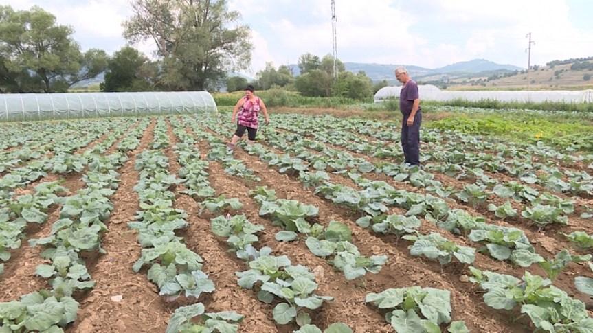 Косовско Поморавље: Кад привреда посутстане, пољоприведа живне