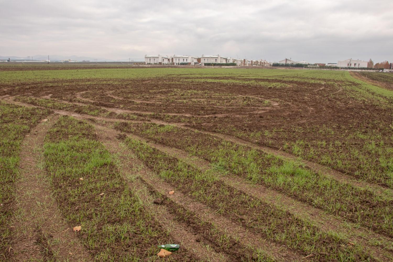 Пшеница Славољуба Костића мета вандала