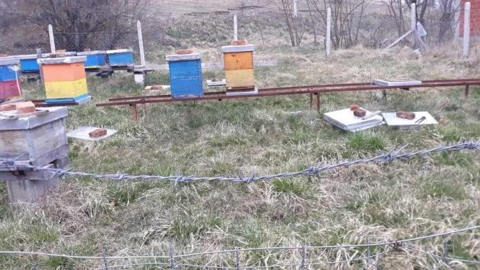 Породици Ратка Џолића украдено девет кошница пчела