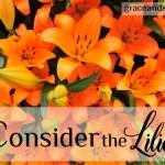 Natalie Liounis Consider the Lilies
