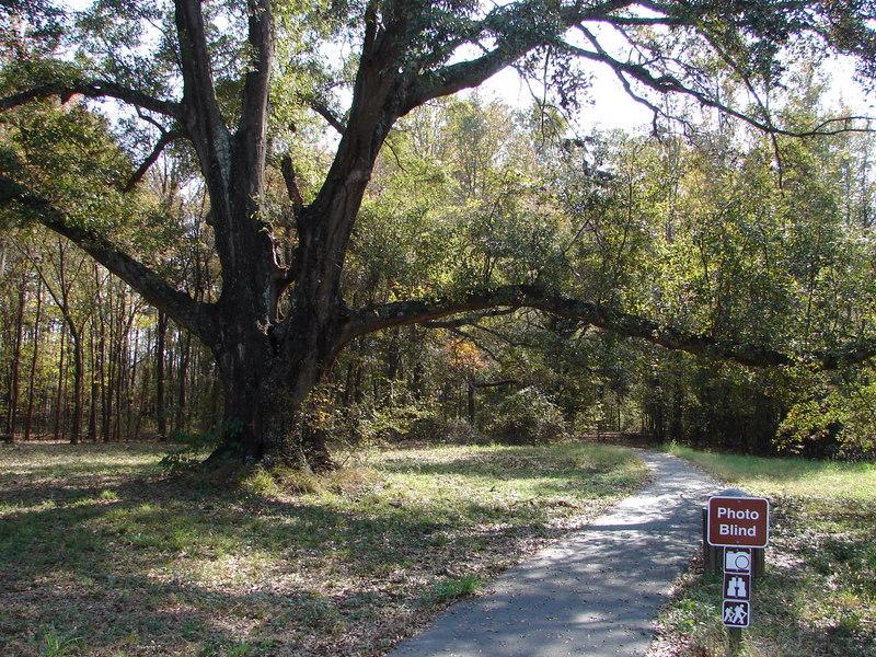 Black Bayou Lake Path