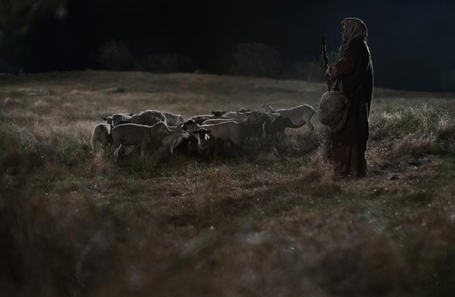 Christmas-Shepherd-flock
