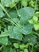 Nature raindrops