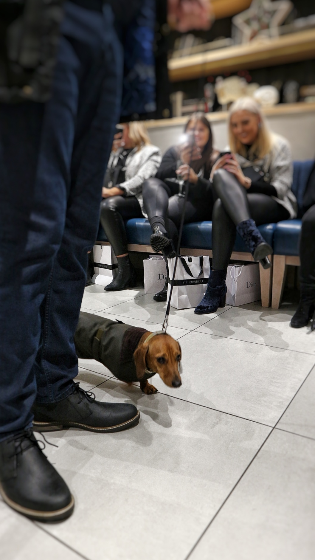 Graceful Blog - The Dachshund of Chelmsford John Lewis