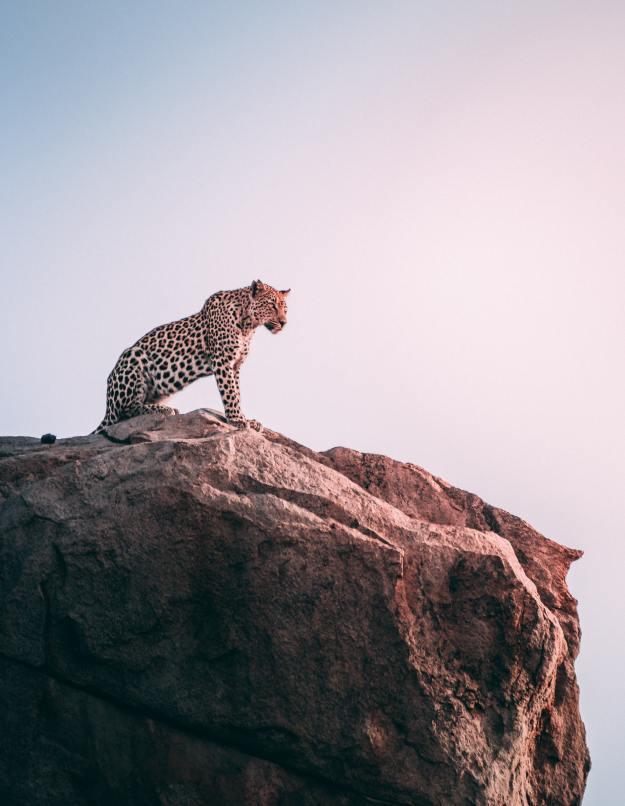 Go Wild - Armchair Travel - Graceful Blog