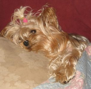 Our furry kids…