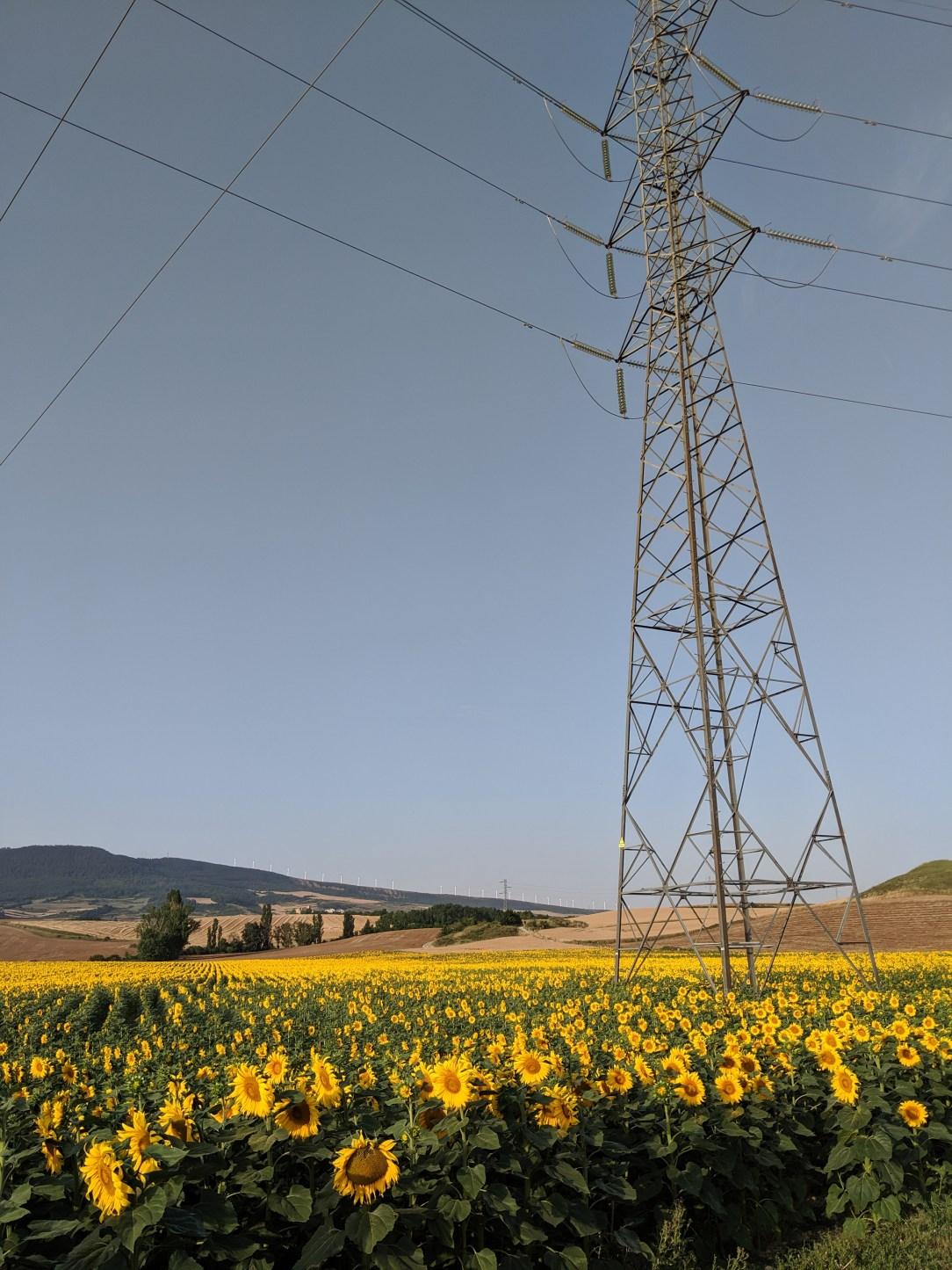 sunflower fields, Spain