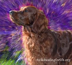 animal-reiki-dog