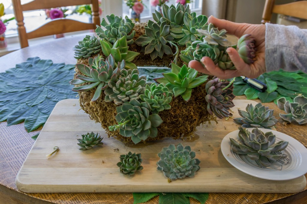 Fill in gaps in your succulent with with smaller cuttings.