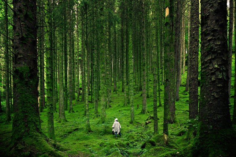 guy in forest
