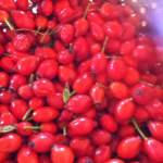 rosehip syrup - image of rose hips