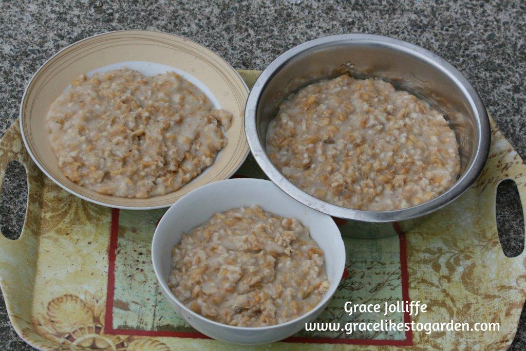 bowls of hen porrige