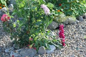 rose-garden-rocky-circle