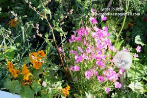 pink-flowers-in-boat