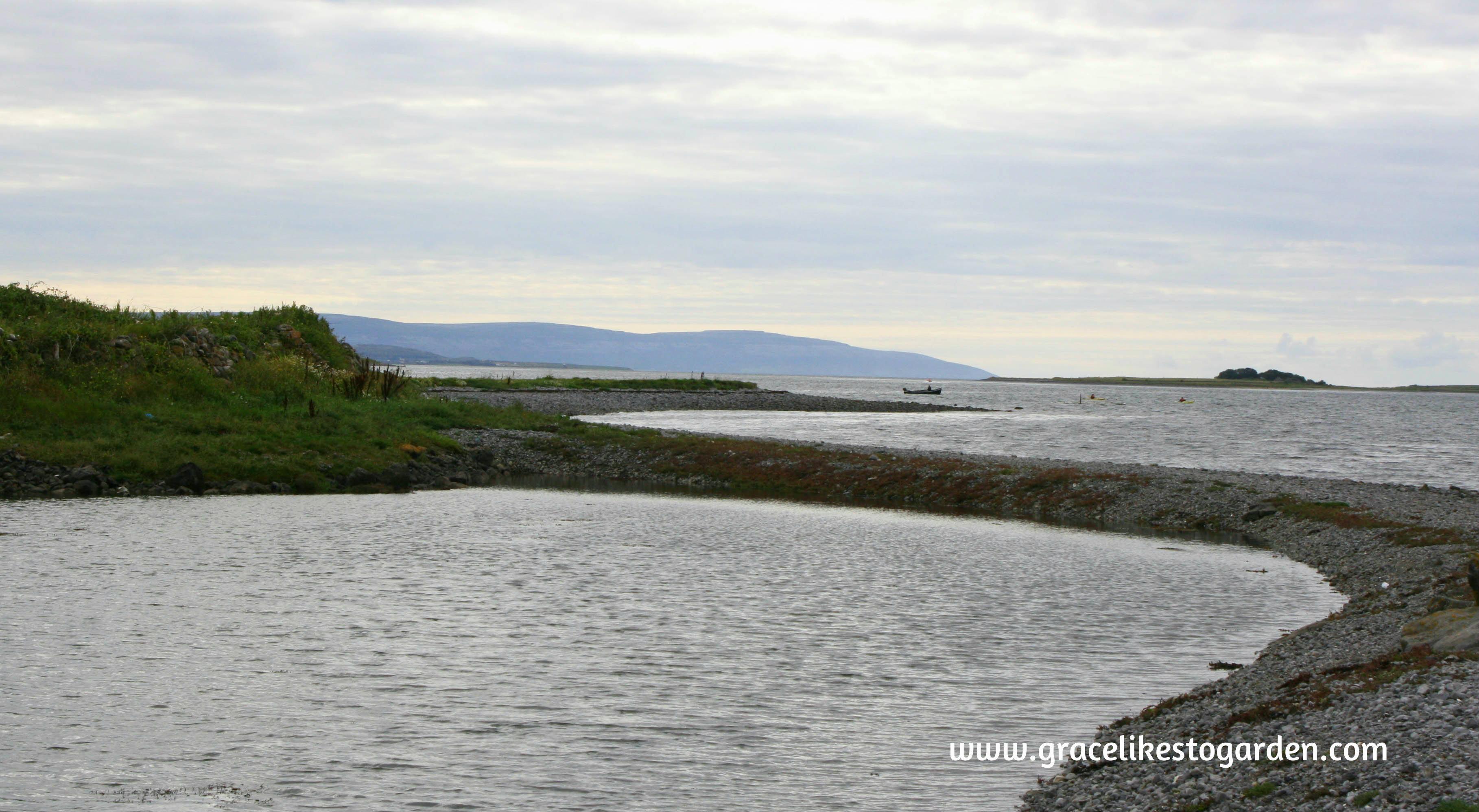 wild teasel visiting island eddy on wild atlantic way