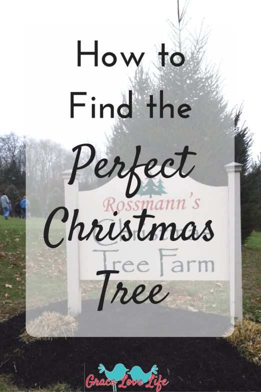 how-to-find-the-perfect-christmas-tree